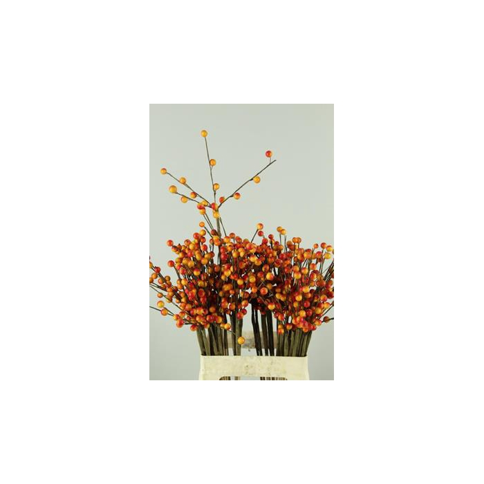 <h4>Stick Berries-twigs Orange</h4>