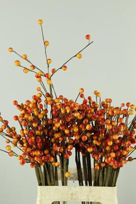 <h4>Stick Berries-twigs Orange</h4>