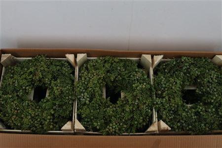 <h4>Wr Juniperus Naturel/orange 30cm</h4>