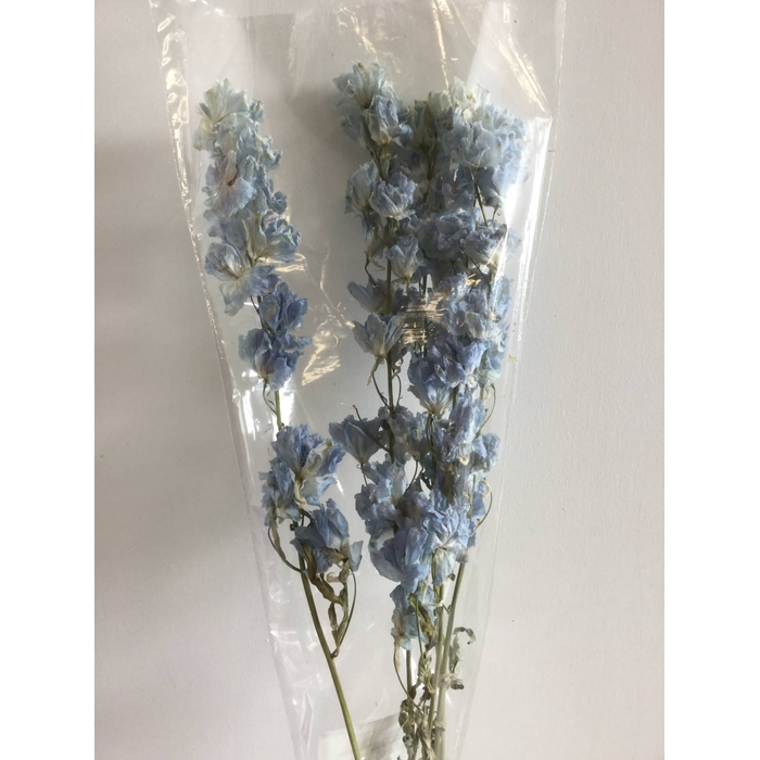 <h4>DRIED FLOWERS - DELPHINIUM GROOTBL. LICHTBLAUW 5TAK 70CM</h4>