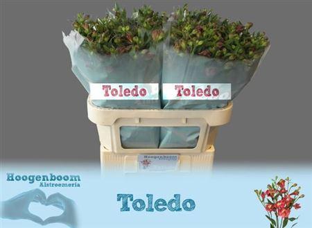 <h4>Alst Fl Toledo</h4>