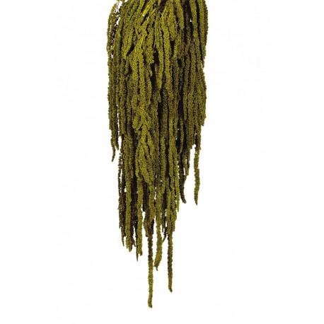 <h4>Amaranthus caudathus verde oscuro preservado</h4>