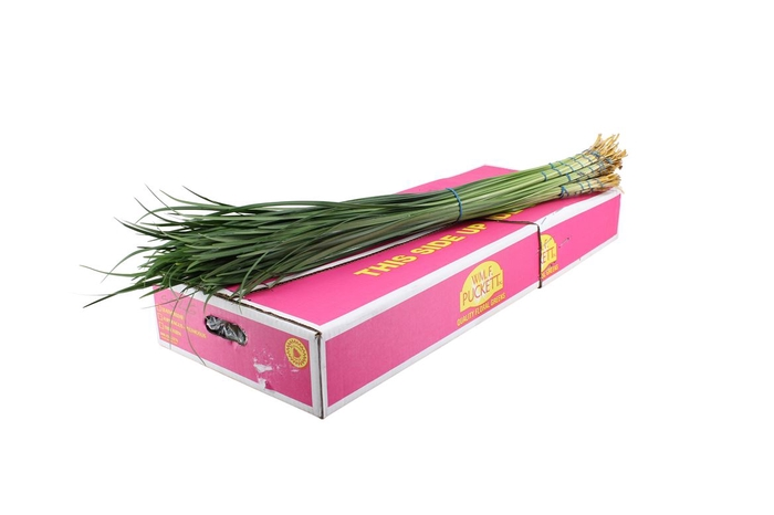 <h4>Lilly Grass Large</h4>