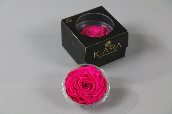 <h4>Rosa Preserved Hot Pink Solitarie</h4>