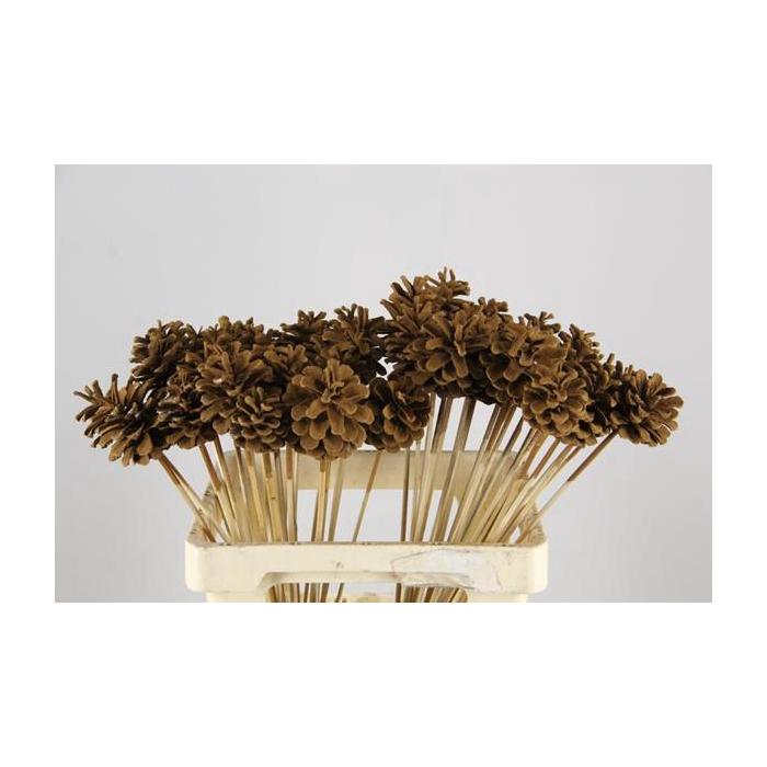 <h4>Stick Pine Cone Cinnamon</h4>