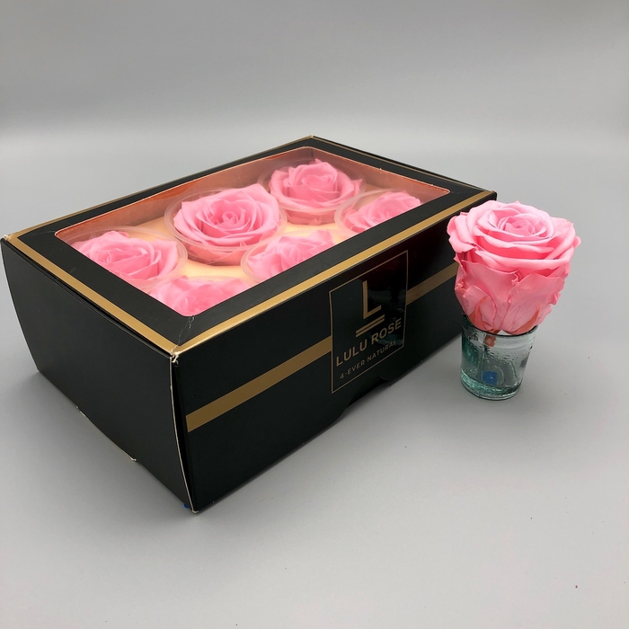 <h4>R PR Lulu (XL) Baby Pink</h4>
