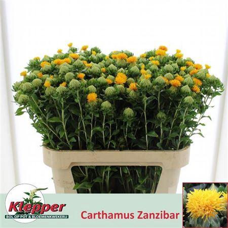 CARTH T ZANZIBAR