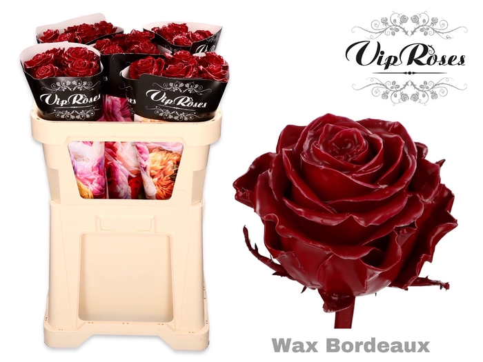 <h4>R GR WAX BORDEAUX x 25</h4>