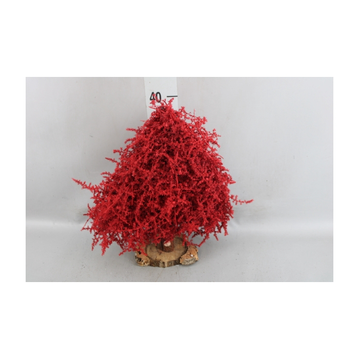 <h4>Kerstboom   ...versierd</h4>