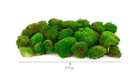 <h4>Pr Y10.20 Pole Moss</h4>