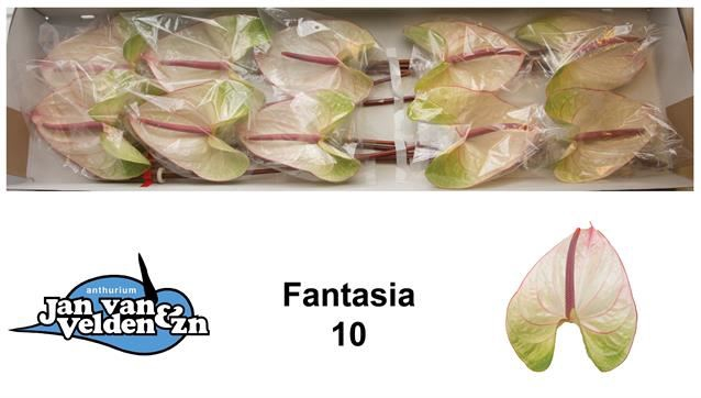 <h4>Anth Fantasia</h4>