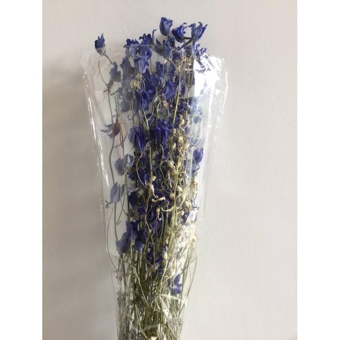 <h4>DRIED FLOWERS - DELPHINIUM VOLCKENFRIEDE</h4>