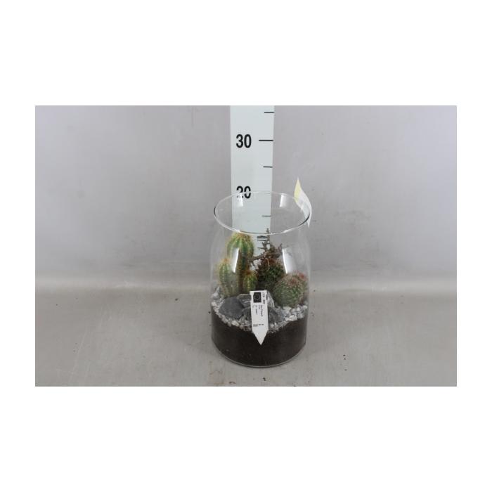 <h4>Arr.   Perkplanten L%</h4>