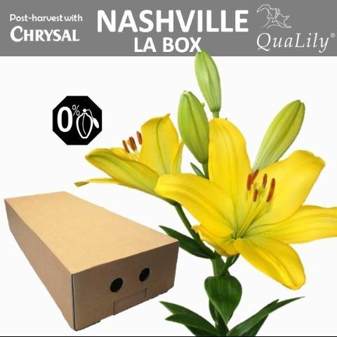 <h4>Li La Nashville</h4>