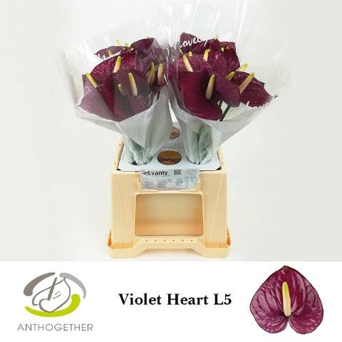 <h4>ANTH A VIOLET HEART 40 L5.</h4>