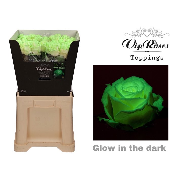 <h4>R GR GLOW IN THE DARK</h4>