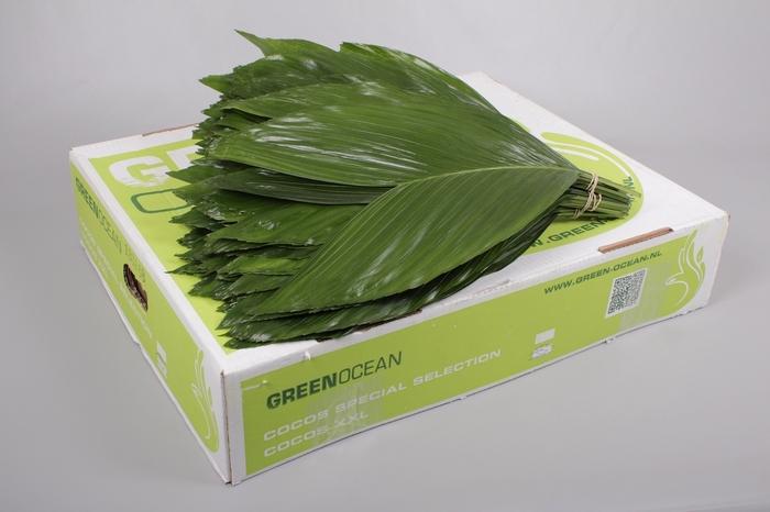 <h4>Cocos XXX Large Green Ocean</h4>