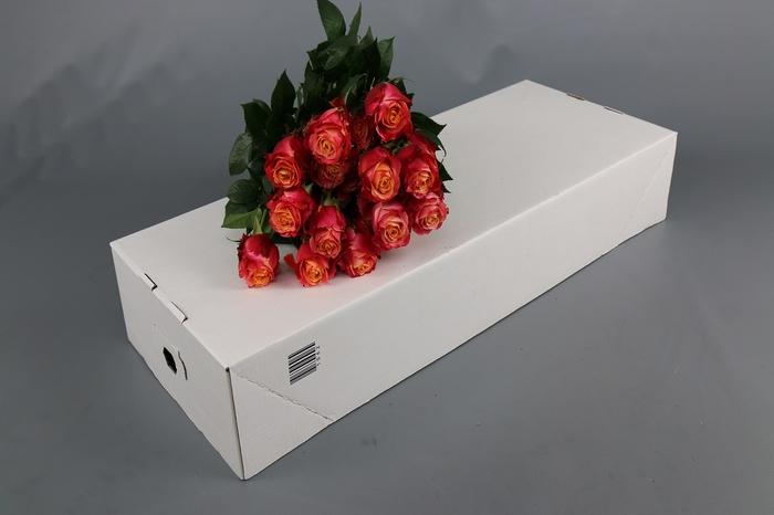 <h4>Rosa Ec 3d</h4>