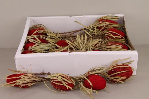 <h4>Df Banksia Hookerana Red</h4>