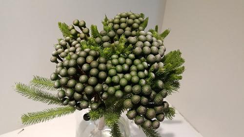 <h4>Greens - Brunia Albiflora Mature</h4>