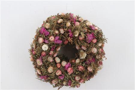 <h4>Wr Fuchsia Sensation Natural 40cm</h4>