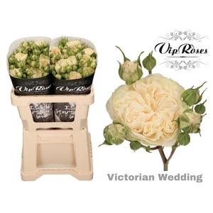 R TR VICTOR WEDDING+