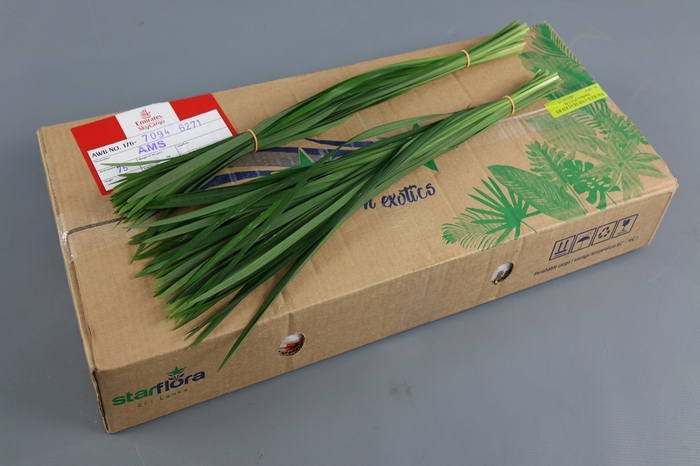 <h4>T-Grass Green</h4>