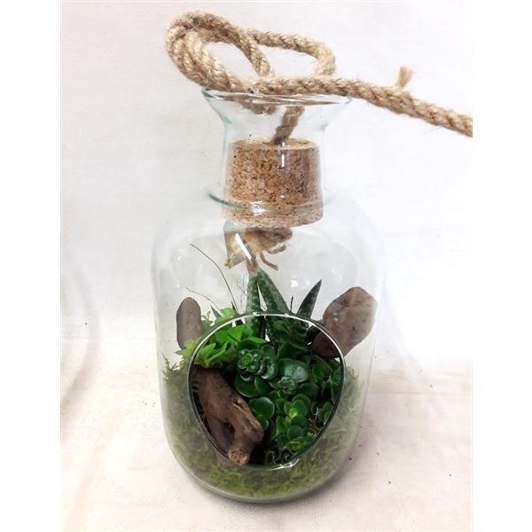 <h4>812 Terrarium +Kurk+touw mini Succulentmix</h4>