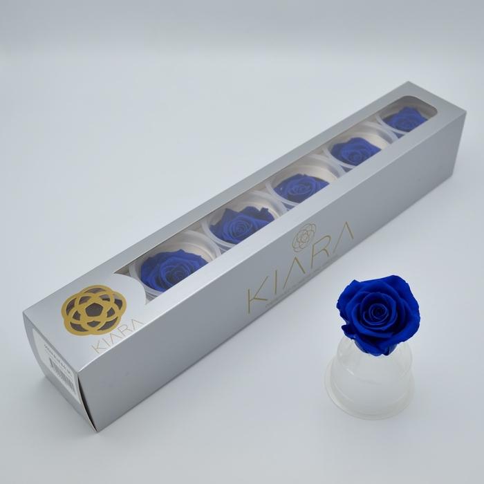 <h4>R PR Splendid Ocean Blue</h4>