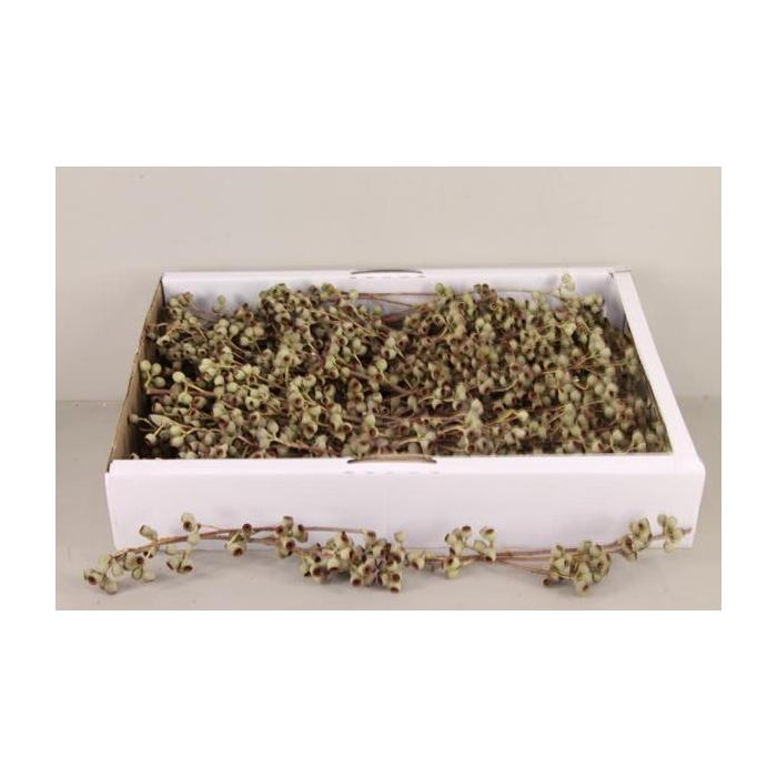 <h4>Ambernut Branche Box (100p)</h4>