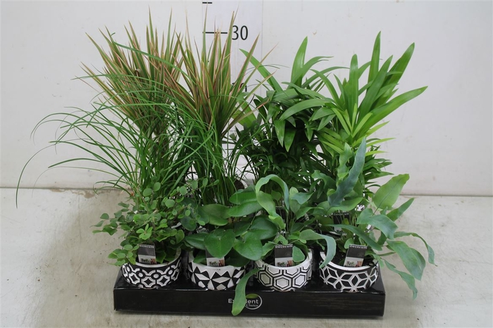 <h4>Plant Mix In Pamm Keramiek</h4>