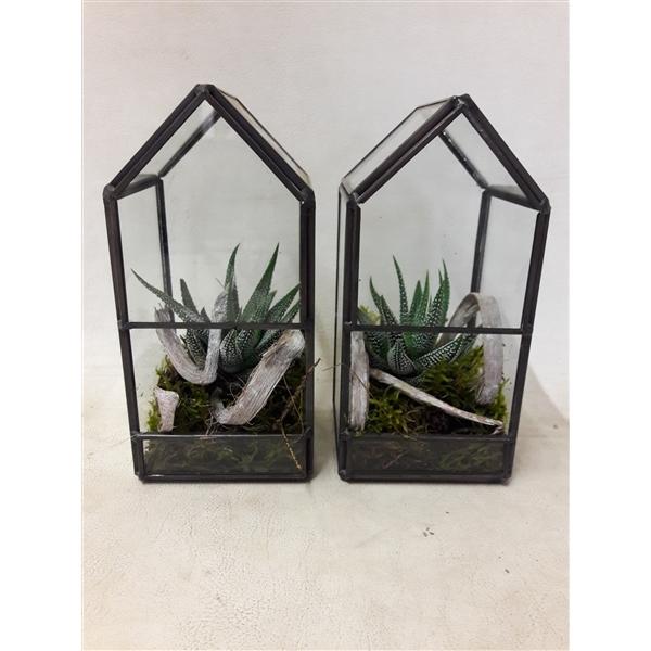 <h4>GHK8 Glass House Mini Terrarium</h4>