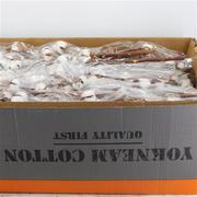 Algodón Gossypium(coton) 5+