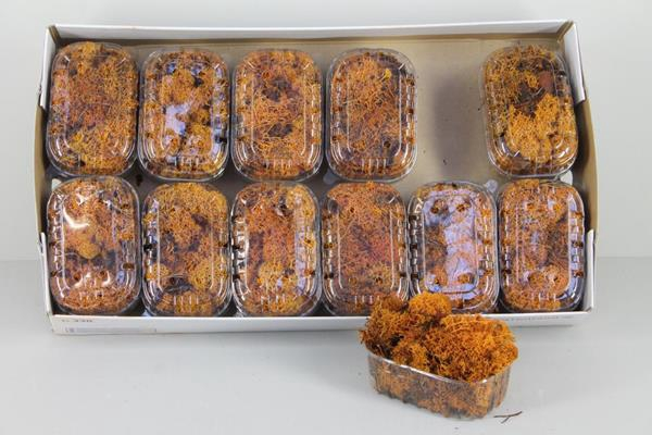 <h4>Moss Icelandic Orange Box</h4>