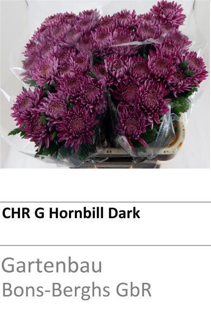 <h4>CHR G HORNBILL DARK</h4>