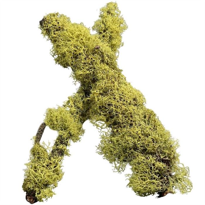 <h4>Moss Stick</h4>