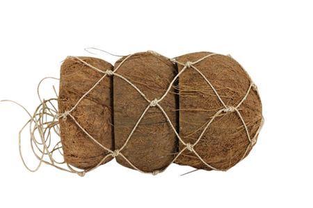 <h4>Basic Coconut Peeled Half 3pc D10-14</h4>