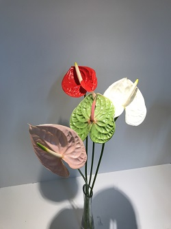 <h4>Anthurium Mix Medium</h4>