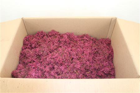 <h4>Reindeer Moss 15kg Cerise B</h4>