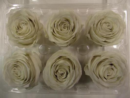 <h4>R Prs Ivory/cream</h4>