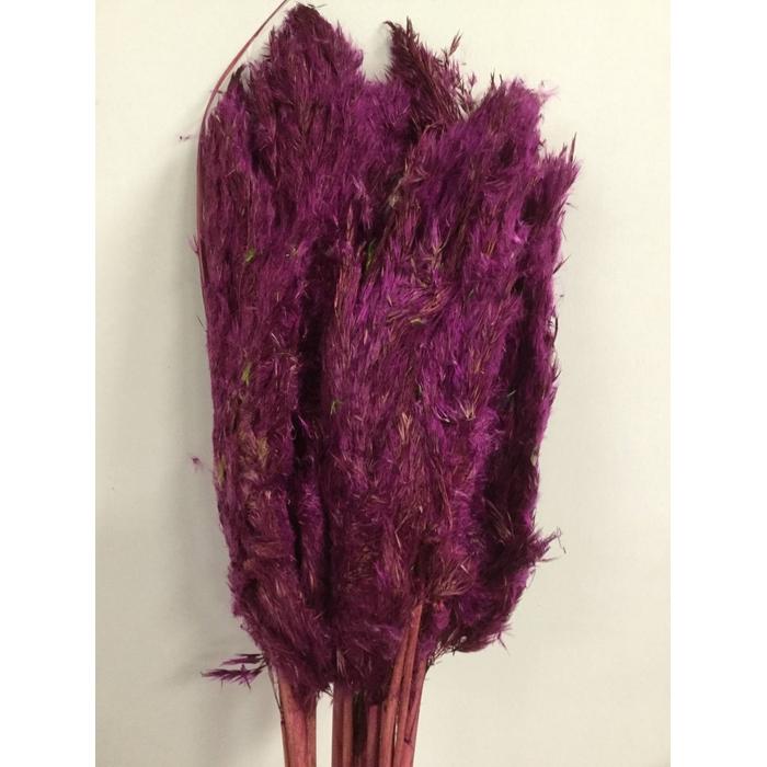 <h4>DRIED FLOWERS - WILDE RIETPLUIMEN 75CM BERRY 10PCS</h4>