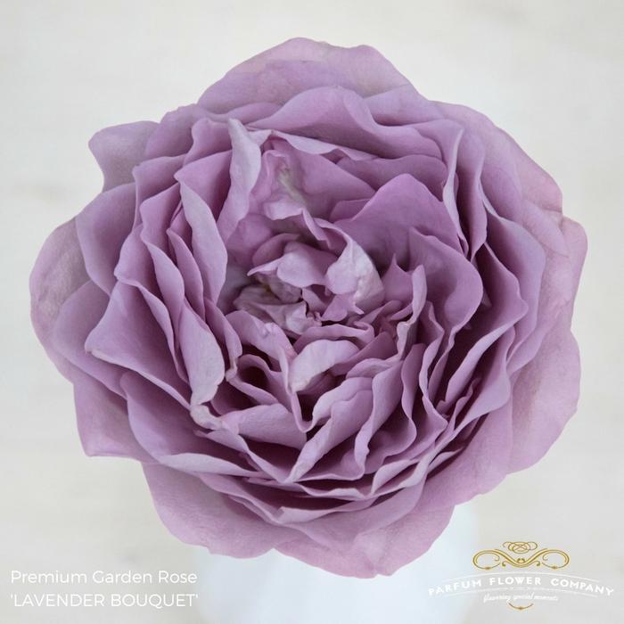<h4>Rosa Garden Lavender Bouquet</h4>