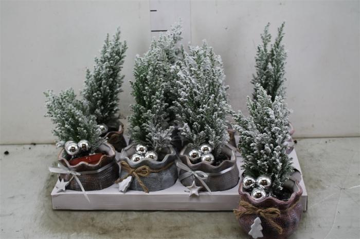 <h4>Kerstb Versierd Snow In Keramiek Kerstzak</h4>