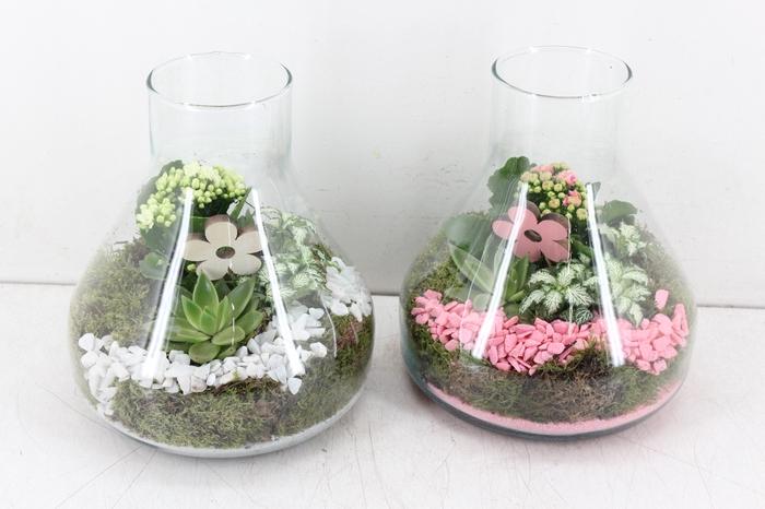 <h4>arr. PL - Glas Paris - roze/wit</h4>