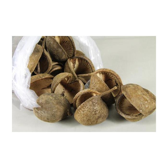 <h4>Buddha Nuts Natural Bag(35)</h4>