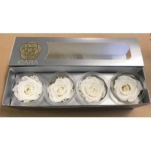 Rose Pure White Super(4)