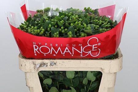 <h4>Hyp Jungle Romance Green</h4>