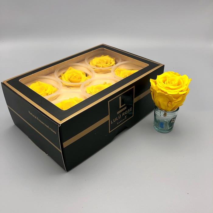 <h4>R PR Lulu (Large) Yellow</h4>