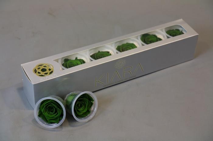 <h4>Rosa Preserved Emerald Green</h4>
