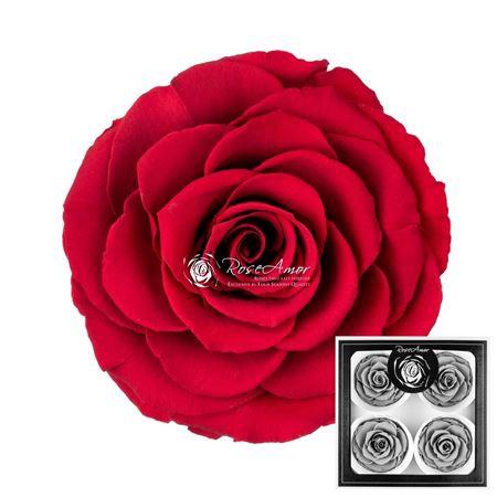 <h4>Pr 5.0 Red-02 Bella</h4>